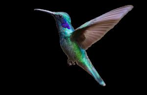 Webseiten mit Liebe gemacht - Kolibri Solutions